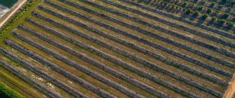 Rural / Farming commercial property for sale at Mareeba Avo Aggregation 262 Mutchilba Road Mutchilba QLD 4872