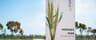 Rural / Farming commercial property for sale at 2354 Back Morundah Road Morundah NSW 2700