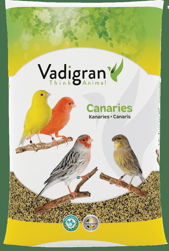 Vadigran Posture & Show Canaries