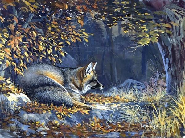 Grey_fox_zifyju