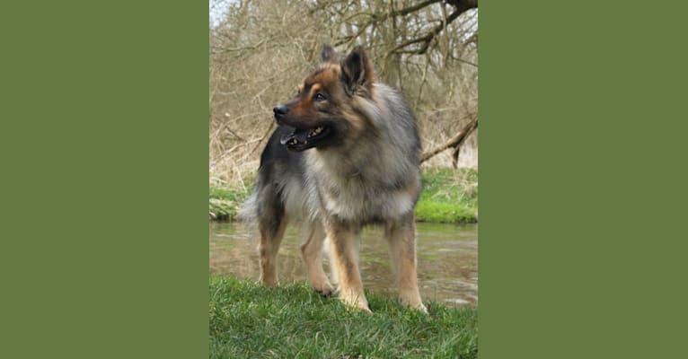 Photo of Cimba, an Eurasier