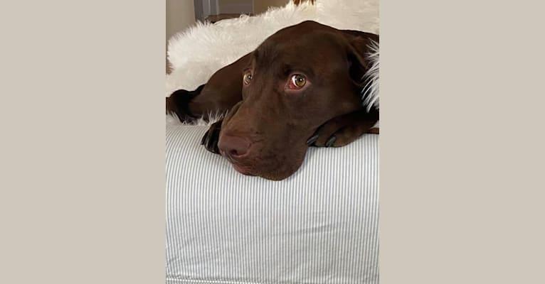 Photo of Cooper, a Labrador Retriever and Redbone Coonhound mix in Lexington, KY, USA