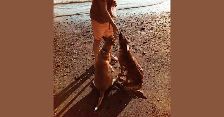 Photo of Marley, an American Village Dog