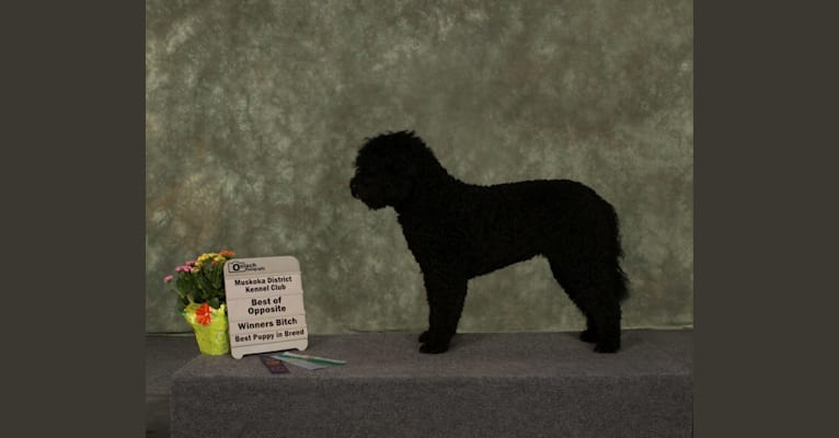 Photo of RUBY TUESDAY, a Barbet