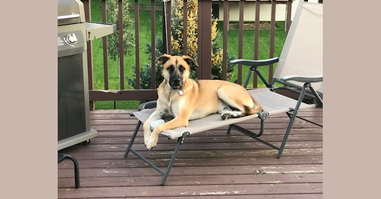 Photo of Aldo, a German Shepherd Dog, American Pit Bull Terrier, and Akita mix in Little Rock, Arkansas, USA