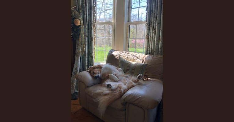 Photo of Fletcher, an Australian Shepherd, Shetland Sheepdog, Pomeranian, Staffordshire Terrier, and Basset Hound mix in Virginia, USA