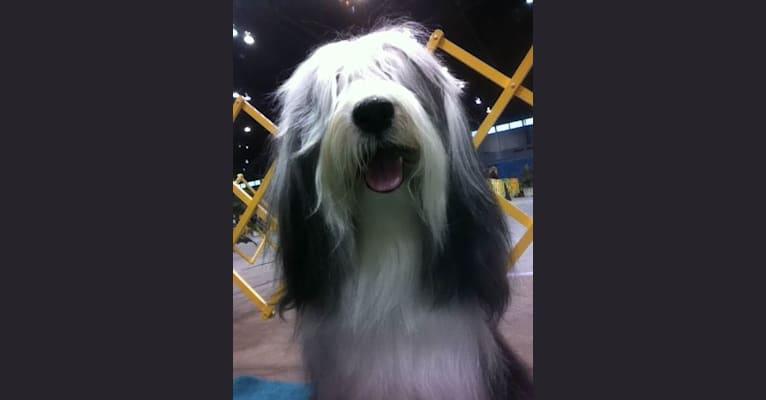 Photo of Spencer, a Tibetan Terrier  in Florida, USA