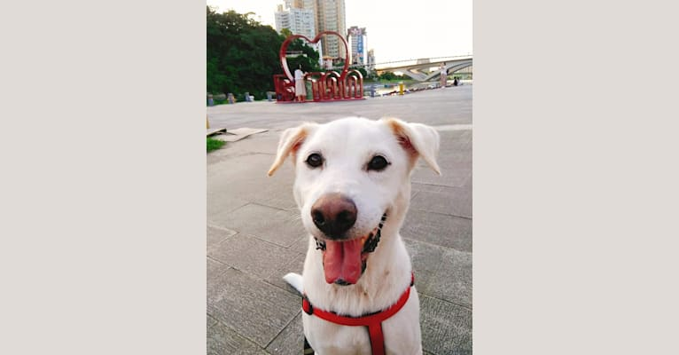 Photo of Casper, a Formosan Mountain Dog  in Taiwan