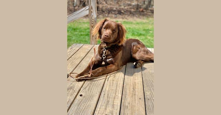 Photo of Cooper, an American Pit Bull Terrier, Labrador Retriever, American Bulldog, Golden Retriever, and Mixed mix in Georgia