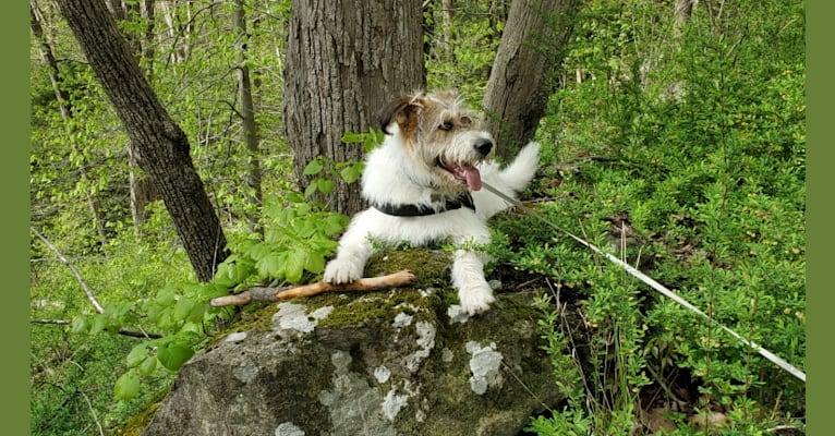 Photo of Aleksei Lundgårdh, an Eastern European Village Dog  in Russia