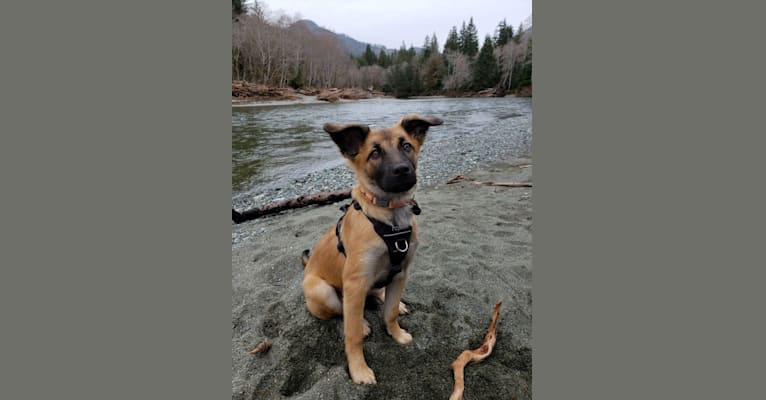 Photo of Lucy, a Formosan Mountain Dog  in Taiwan