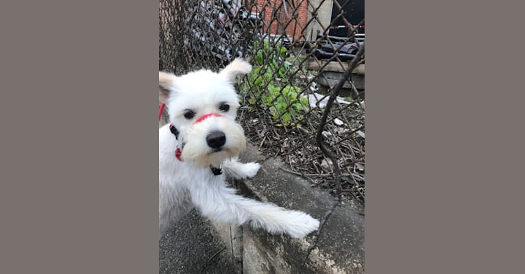 Photo of Holly Monster, an East Asian Village Dog  in null