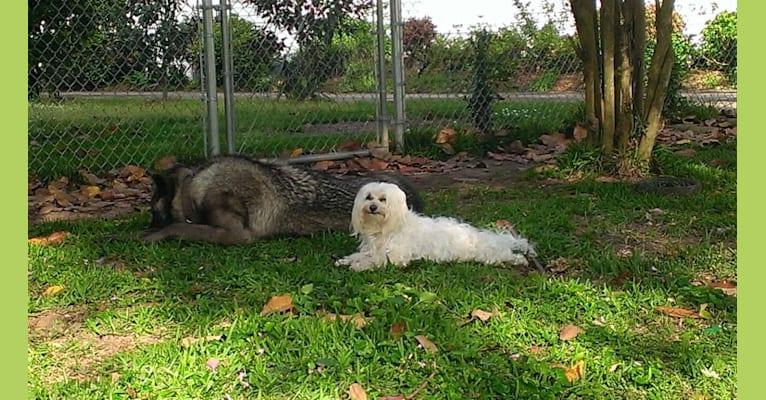 Photo of Lougarou, a   in Rancho Cucamonga, CA, USA