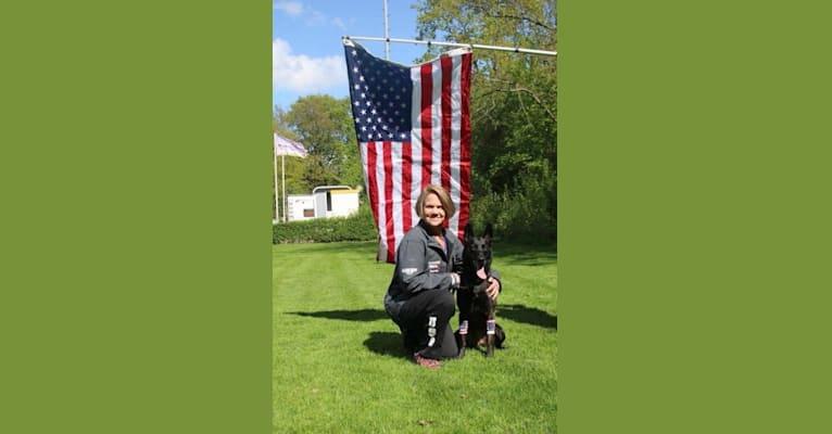 Photo of Nike des las Flores, a Dutch Shepherd  in Rochester, Washington, USA