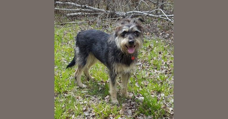 Photo of Ellie, a Labrador Retriever, Australian Cattle Dog, German Shepherd Dog, and Mixed mix in Oklahoma, USA