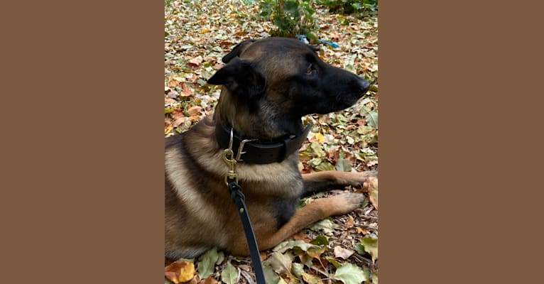 Photo of Shadow, a Belgian Shepherd  in Questa, New Mexico, USA