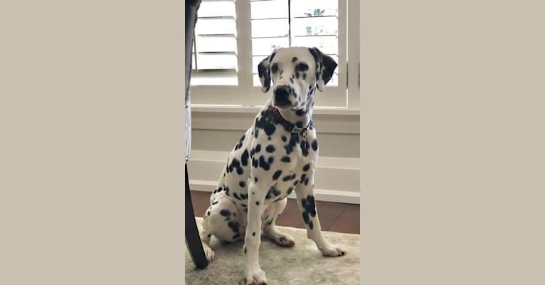 Photo of Pepper, a Dalmatian  in Ohio, USA