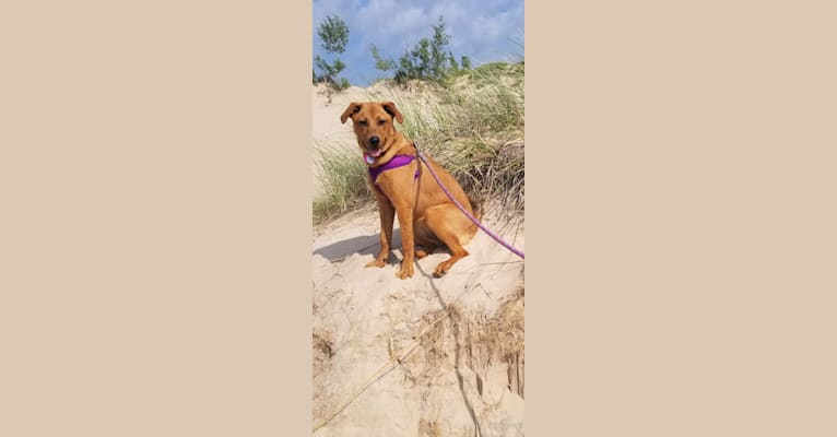 Photo of Bailey Jade, an Australian Cattle Dog, Great Pyrenees, Beagle, and Black and Tan Coonhound mix in Allendale Charter Twp, Michigan, USA