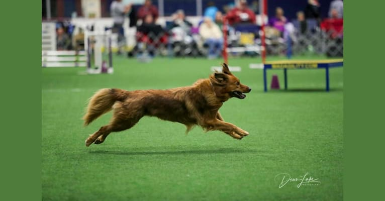 Photo of Palisadie's Duchess of Sheborgo (Sadie), a Border Collie, Chow Chow, Collie, and Australian Cattle Dog mix in Nebraska, USA