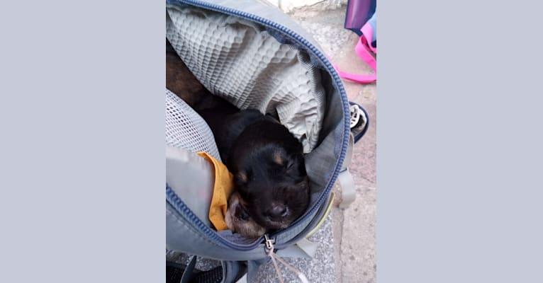 Photo of Fiep, an Eastern European Village Dog  in Sarajevo, Federatie van Bosnië en Herzegovina, Bosnië en Herzegovina
