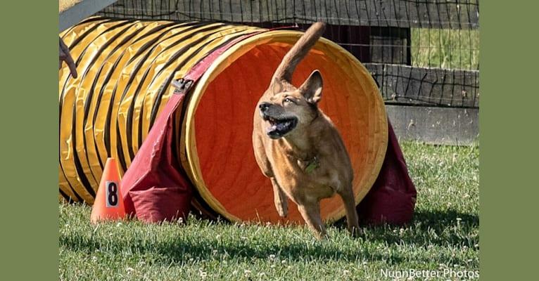 Photo of Scotchie, a Siberian Husky, German Shepherd Dog, Labrador Retriever, Chow Chow, and Mixed mix in Indiana, USA
