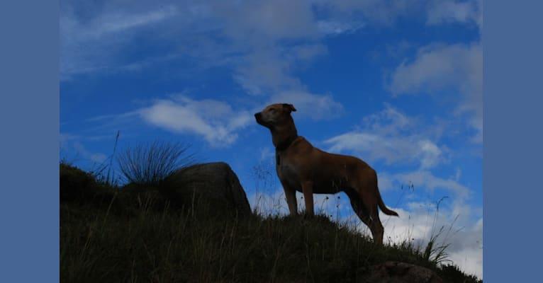 Photo of Bona, an Arabian Village Dog  in Oman
