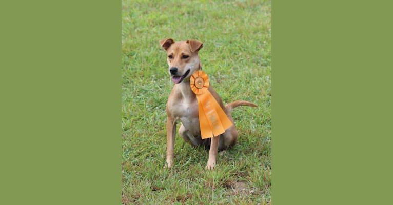Photo of Tirzah, a Carolina Dog  in North Carolina, USA