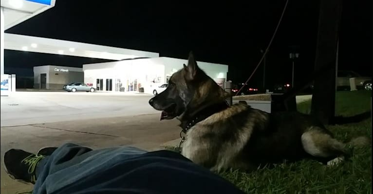 Photo of Fenris, a   in Athens, Texas, USA