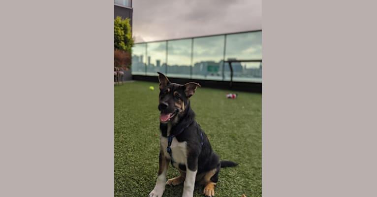 Photo of Cooper, a Hong Kong Village Dog  in Hong Kong