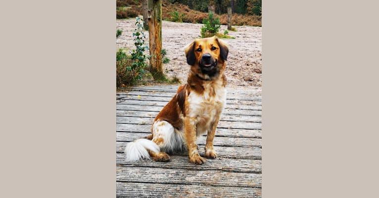 Photo of Fenna, a Stabyhoun  in Ter Idzard, Nederland