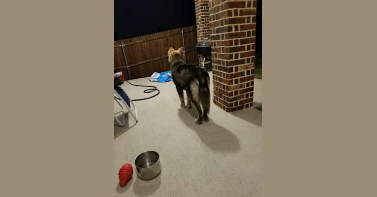 Photo of Bear, a   in Texas, USA