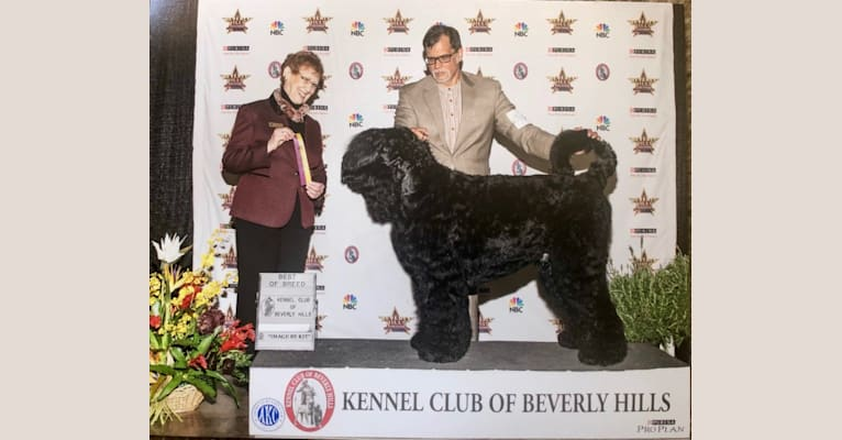 Photo of Ermak, a Black Russian Terrier  in Italy