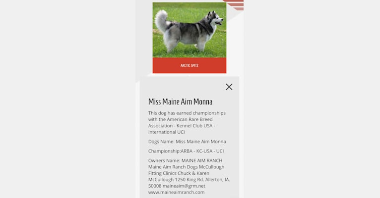 Photo of Moana, a Pomsky  in Maine Aim Ranch, King, Allerton, IA, USA