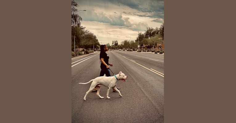 Photo of Aiden, a Dogo Argentino  in Hinton, OK, USA