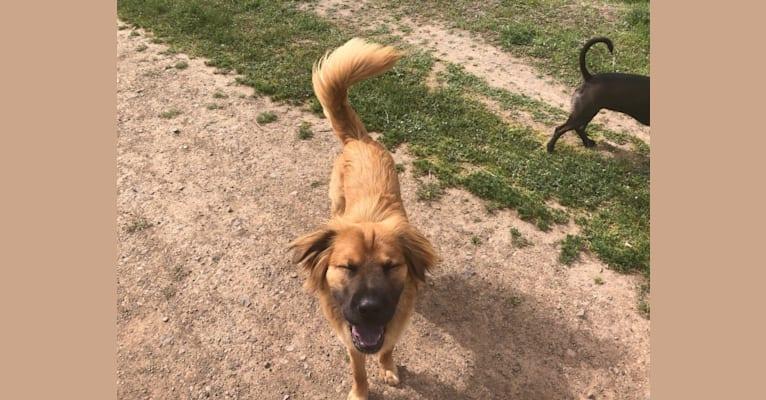 Photo of Talia, a German Shepherd Dog, Chinese Shar-Pei, and Mixed mix in Volgograd, Volgograd Oblast, Russia