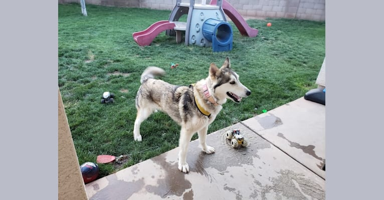 Photo of Kaia, a   in Goodyear, Arizona, USA