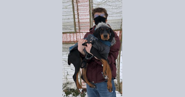 Photo of Arlo, a Doberman Pinscher  in 32151 South 4450 Road, Vinita, OK, USA