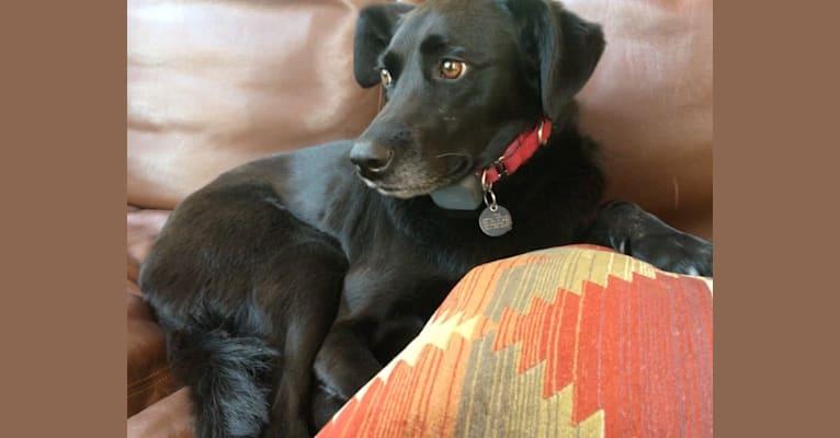Photo of Luna, a Labrador Retriever, Beagle, German Shepherd Dog, and Mixed mix in Taichung City, Taiwan
