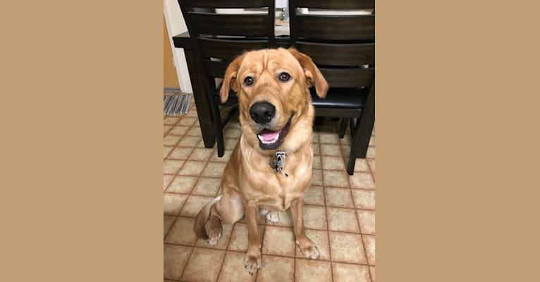 Photo of Murphy, a Labrador Retriever and Golden Retriever mix in San Diego, CA 92154, USA