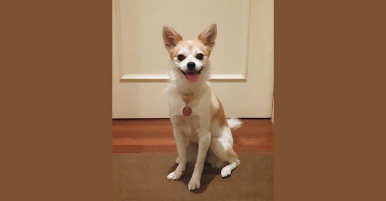 Photo of JeriJeree, a Japanese and Korean Village Dog  in Seoul, Seoul, South Korea
