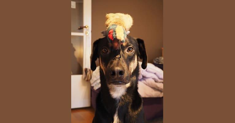 Photo of Victor, a German Shepherd Dog, Rottweiler, Boxer, Doberman Pinscher, and Mixed mix in Lisbon, Lisbon, Portugal