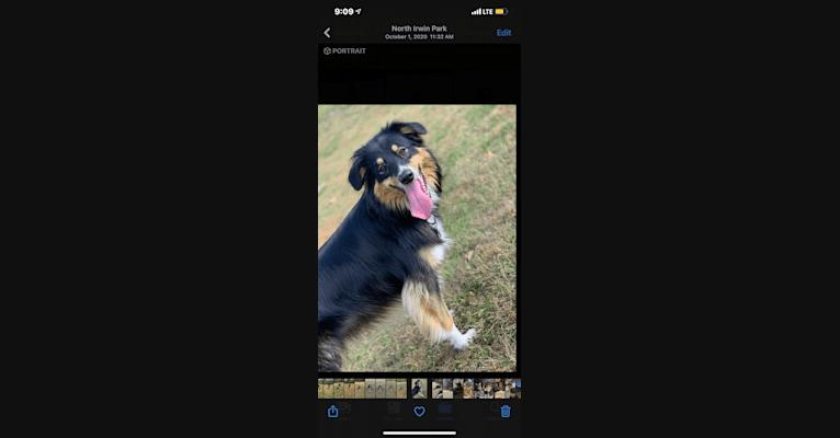 Photo of Zoey, an Australian Shepherd and Australian Cattle Dog mix in Harmony, PA, USA