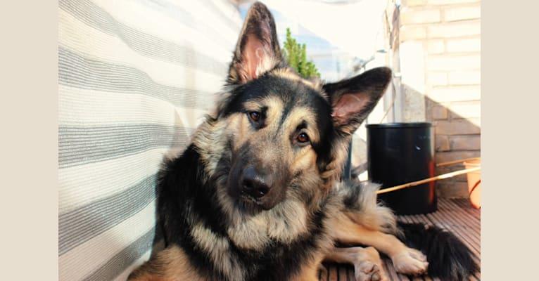 Photo of Flóki, an Eastern European Village Dog  in Moskou, Rusland