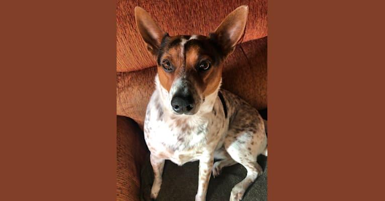 Photo of Sadie, an Australian Cattle Dog, Border Collie, and Mixed mix in Santa Paula, California, USA