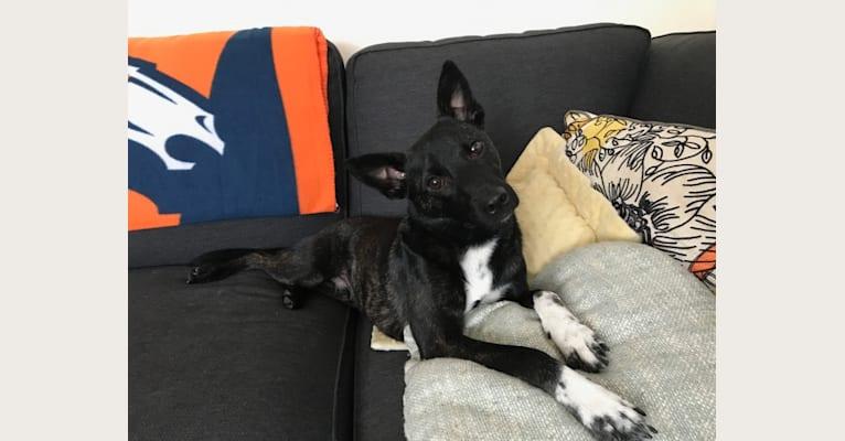 Photo of Indiana Mother-fuckin' Jones, a Formosan Mountain Dog  in Taipei City, Taiwan