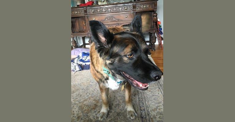 Photo of Ojo, a German Shepherd Dog, Mastiff, Golden Retriever, Labrador Retriever, Mountain Cur, and Mixed mix in Ridgewood, New Jersey, USA