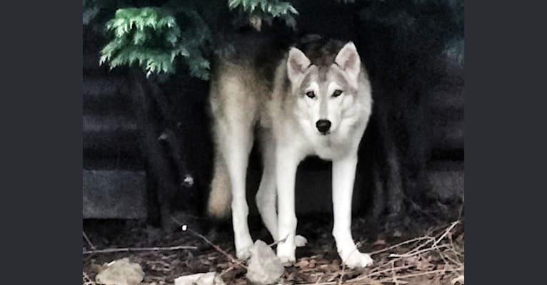 Photo of Kobi, a   in UK