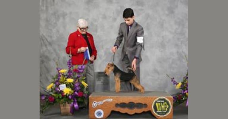 Photo of Erik, a Lakeland Terrier  in Grove City, MN, USA