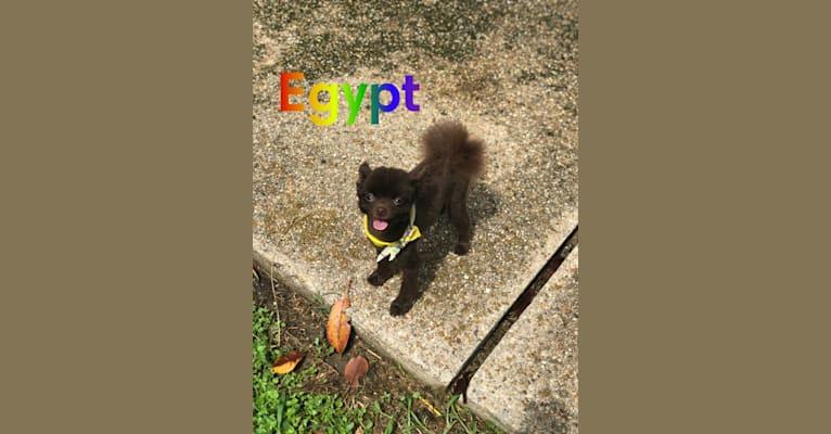 Photo of Egypt,   in Tickfaw, LA, USA