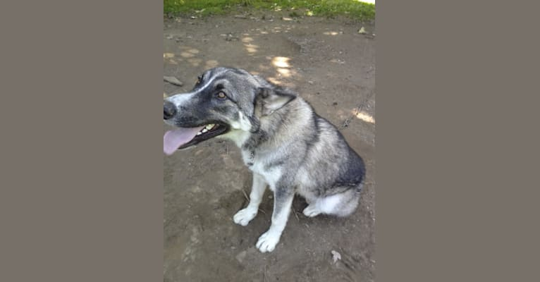 Photo of NANOOK, a   in Ohio, USA